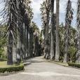 Fotografia de uma das alamedas principais do jardim Botânico Tropical, com duas fileiras de grandes Palmeiras